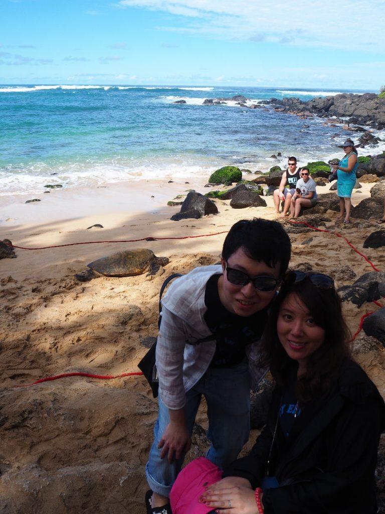 ハワイのウミガメと撮影
