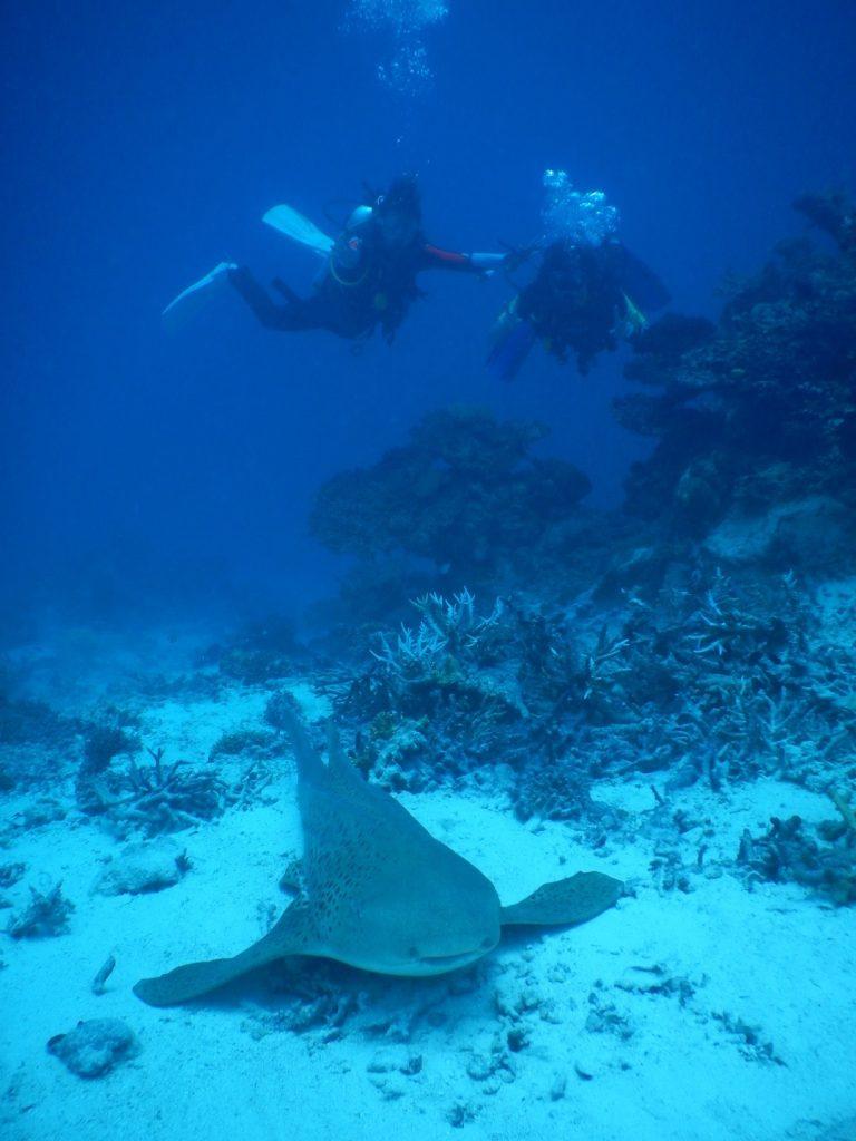 モルディブでダイビング中に遭遇したサメと一緒に撮影