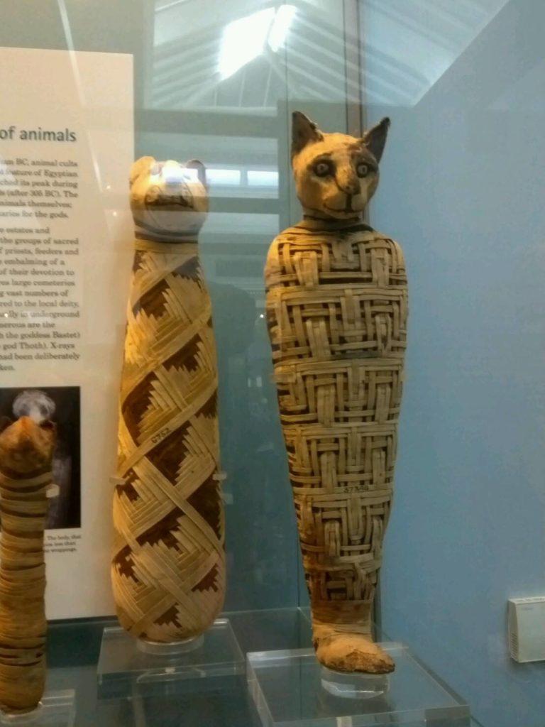 大英博物館(British Museum)の猫のミイラ