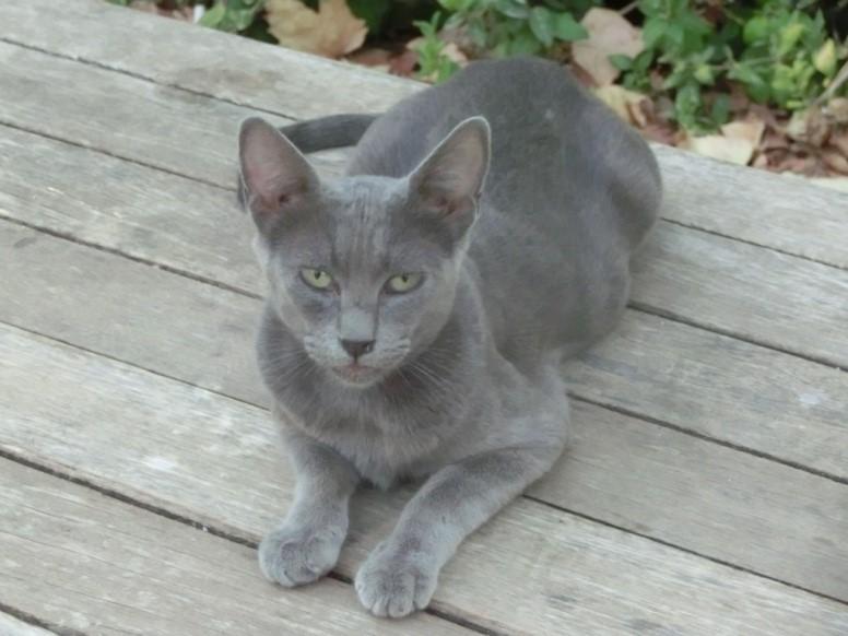 セビリアの野良猫