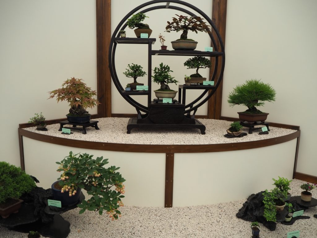 チェルシー・フラワーショーの盆栽