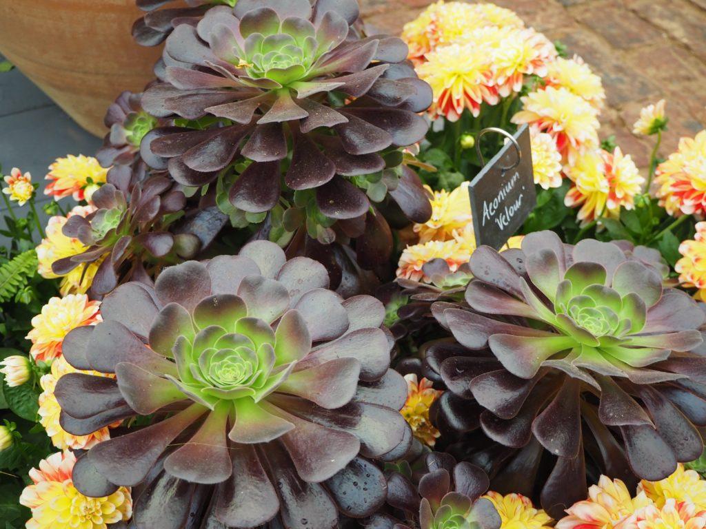 チェルシー・フラワーショーの展示の花