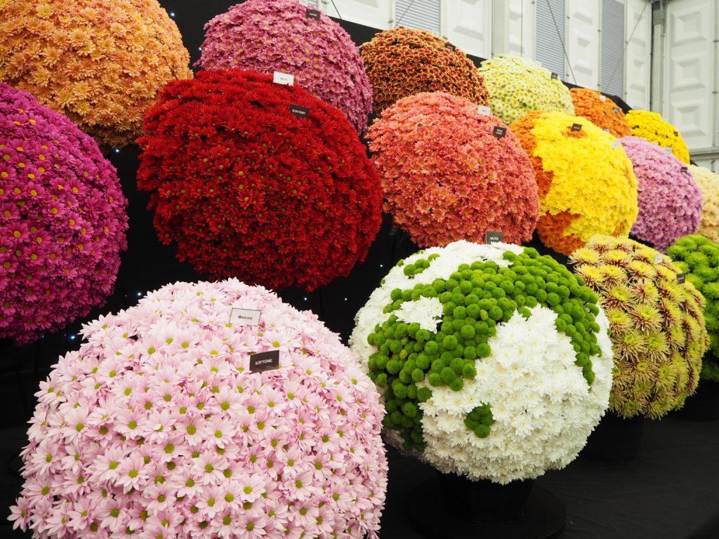 チェルシー・フラワーショー(Chelsea Flower Show)の展示、販売される花