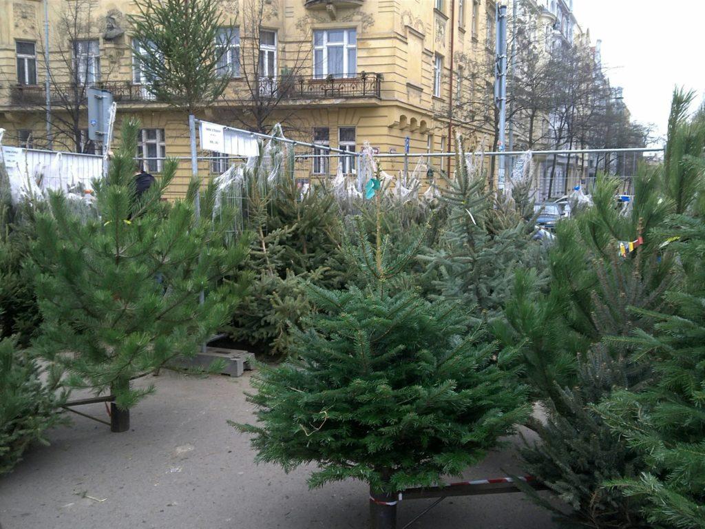 プラハで売られているクリスマスツリー