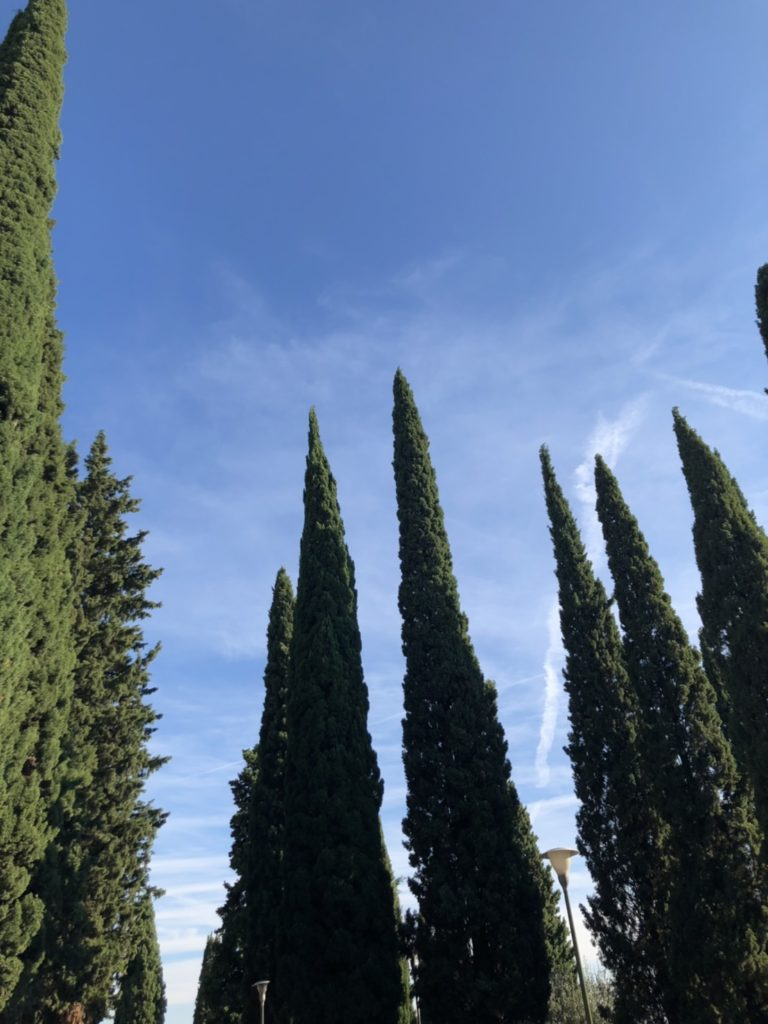ヴェローナのサン・ピエトロ城(Castel San Pietro)の丘の様子