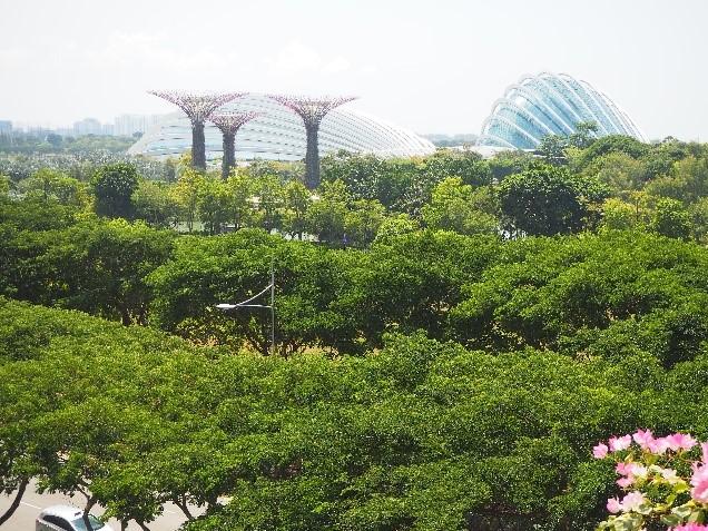 シンガポールのガーデンズバイザベイのフラワードームとクラウドフォレスト
