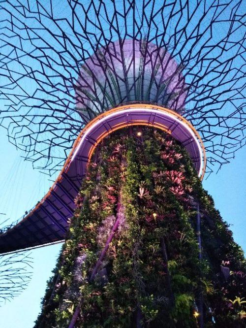 シンガポールのガーデンズバイザベイのスーパーツリー・グローブのガーデン・ラプソディ