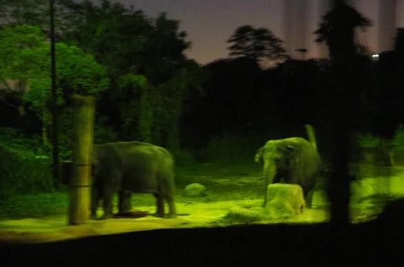 シンガポールのナイトサファリで見た象