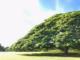[ハワイ]この木なんの木~日立CMのモアナルアガーデンパーク